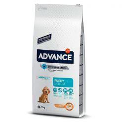 advance-medium-puppy