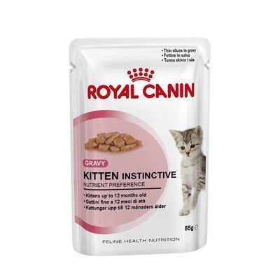 kitteninstinctive