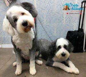 peluquería canina en Alcorcón